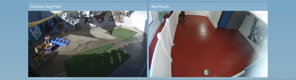 Staff has access too 24/7 Cameras with 10 day back up in all Dog living and play areas