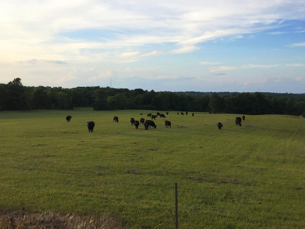 pasture3.jpg