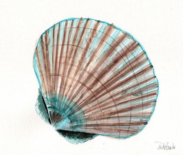 redstreake_seashell2.jpg