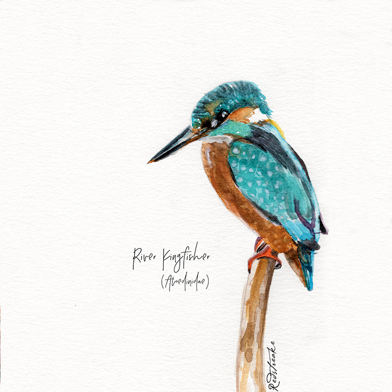 kingfisher2.jpg