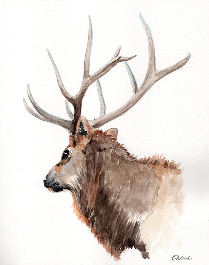 reindeer_portrait2.jpg