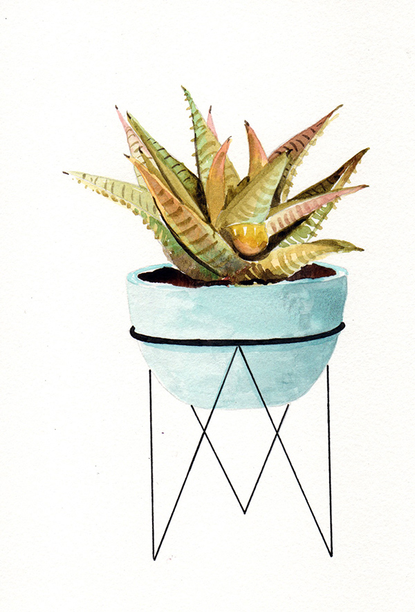 succulent1_lowres.jpg