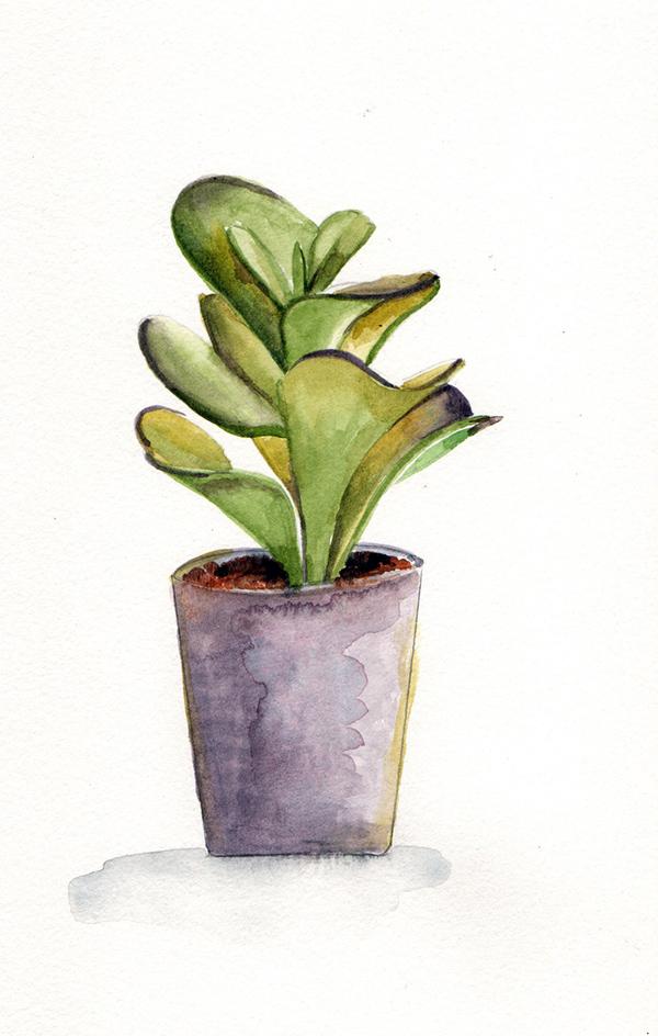 succulent2_lowres.jpg