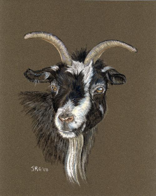 goat_lg.jpg