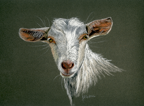 saanen_goat_lg.jpg