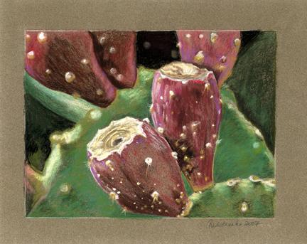 cactus-fruit_lg.jpg
