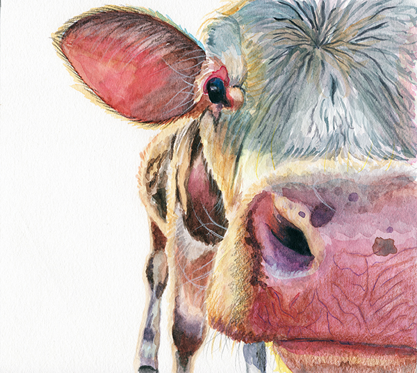 cow_closeup_redstreake.jpg