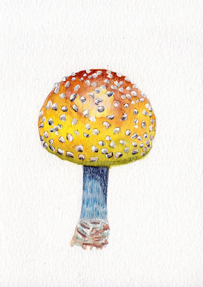 Yellow Globe Mushroom