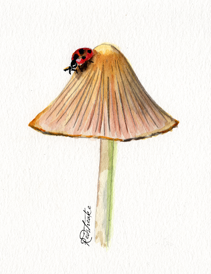 A Mushroom and her Friend