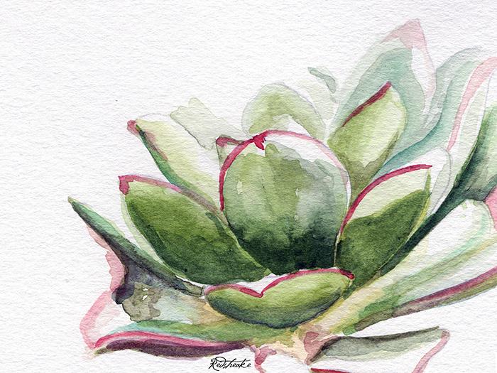 succulentcloseup.jpg