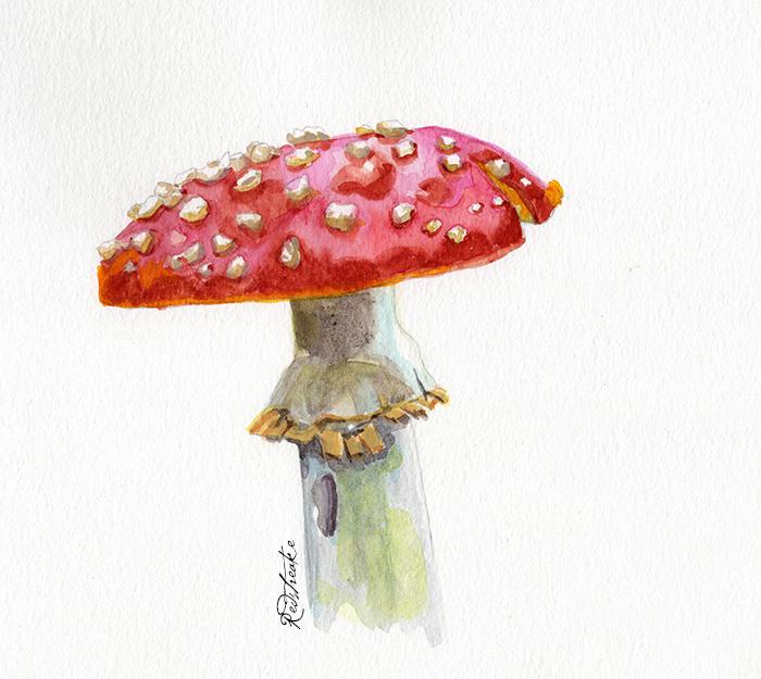 redspeckledmushroom2.jpg