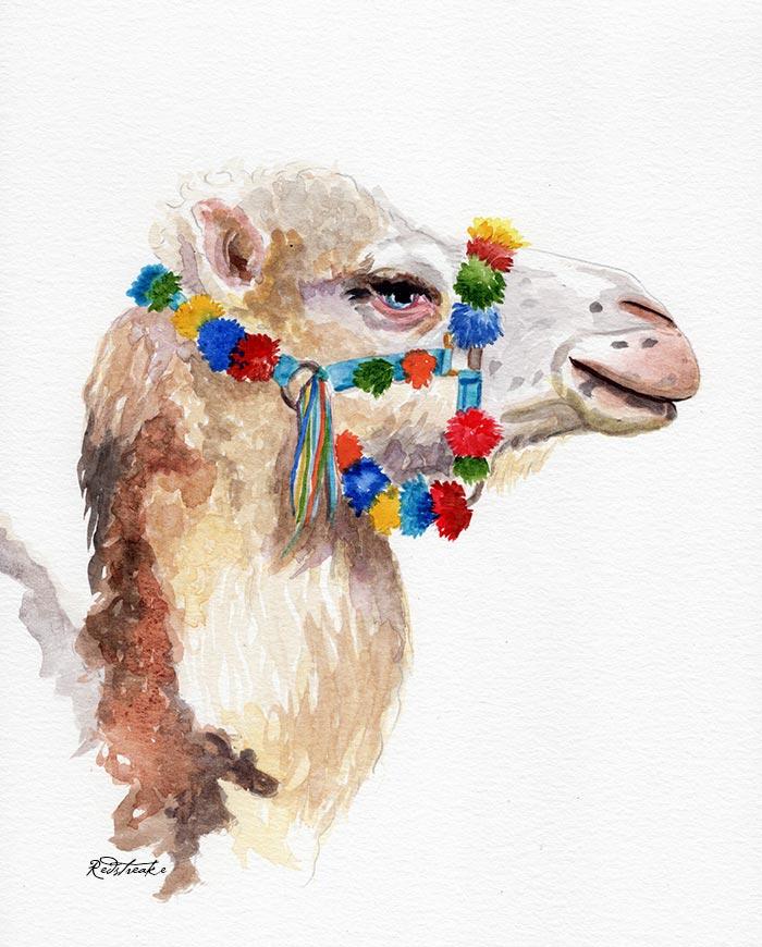 Pretty Camel