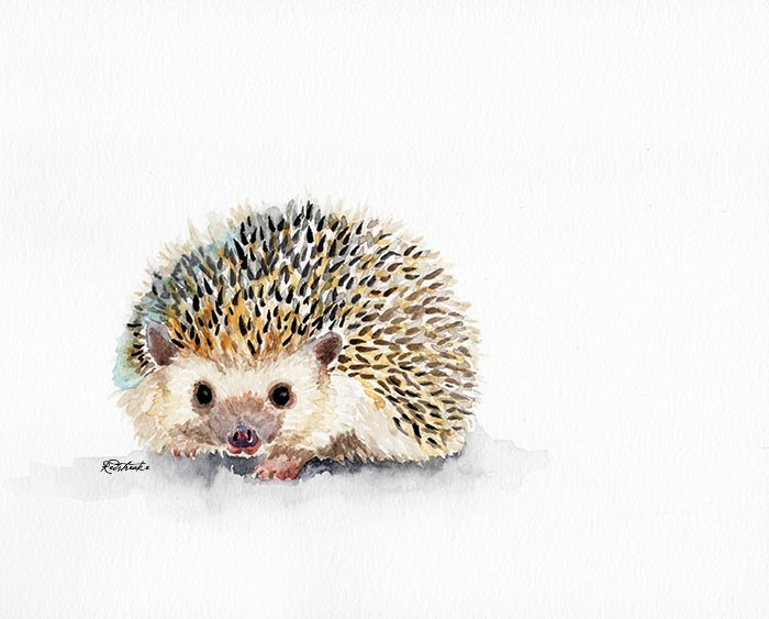 hedgehog__lowres_redstreake.jpg