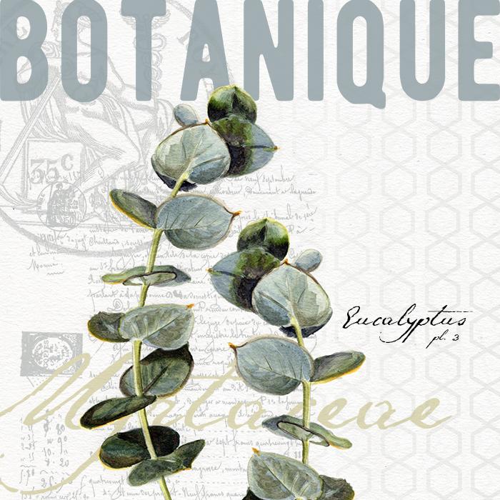 eucalyptus_botanical_redstreake.png