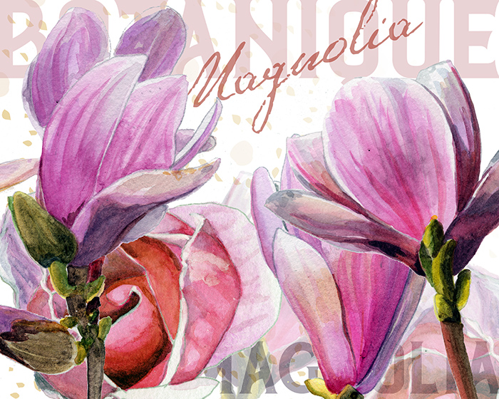 magnolia_layout2_redstreake.jpg