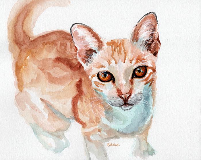 orangecat_redstreake.jpg