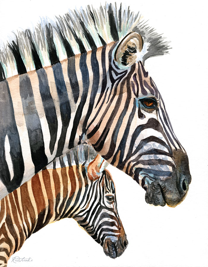 zebrafamily.jpg