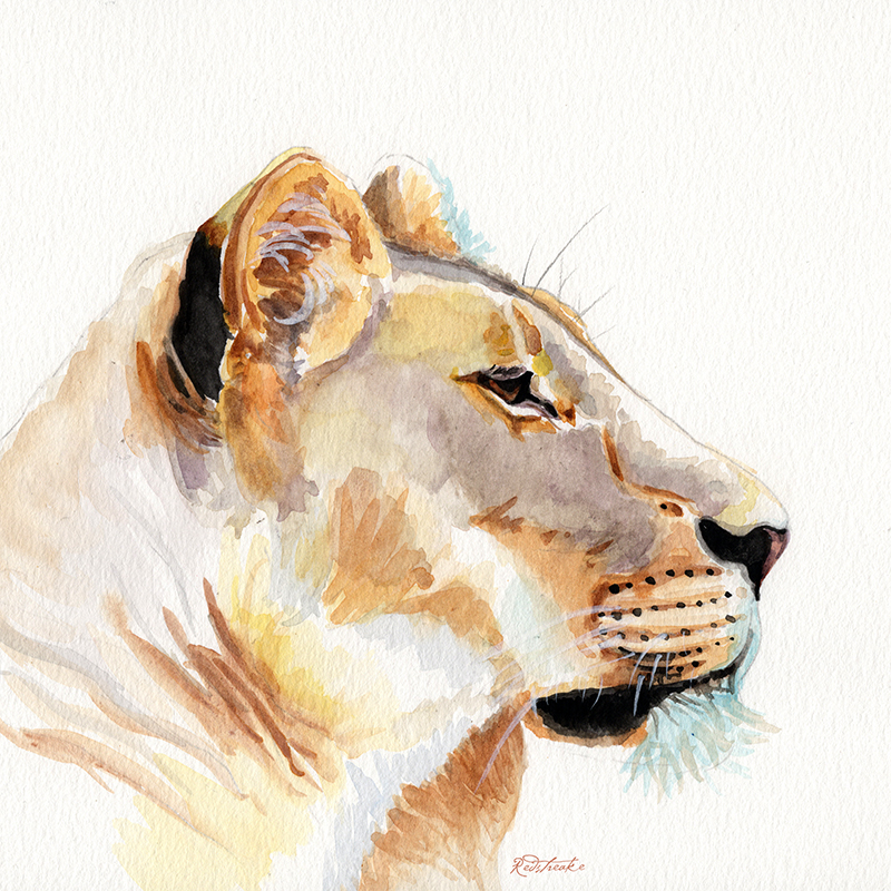 lioness_redstreake.jpg