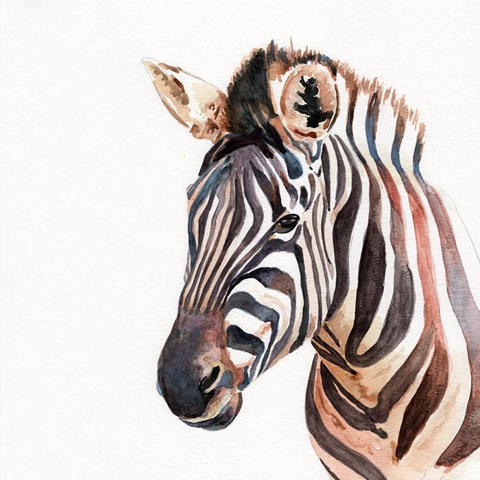 zebra_th.jpg