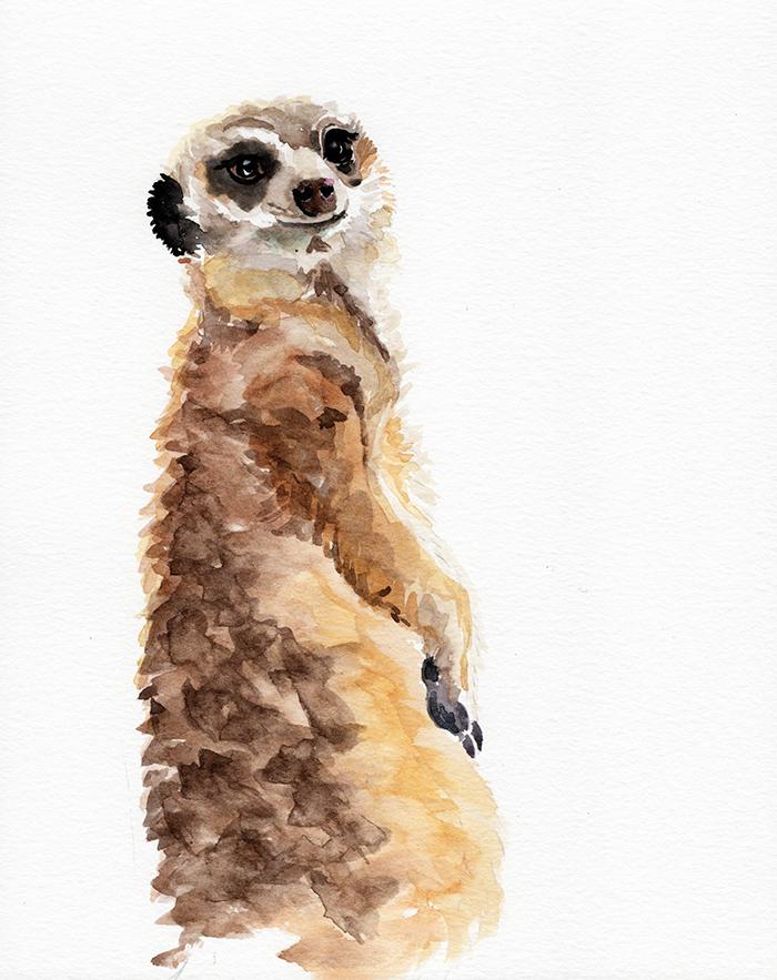 meerkat_redstreake.jpg