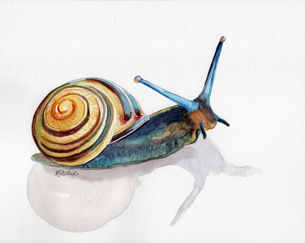 snail_redstreake.jpg