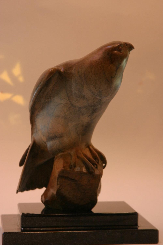 Contemplative Falcon
