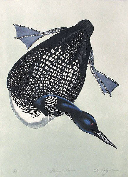 Diving Loon