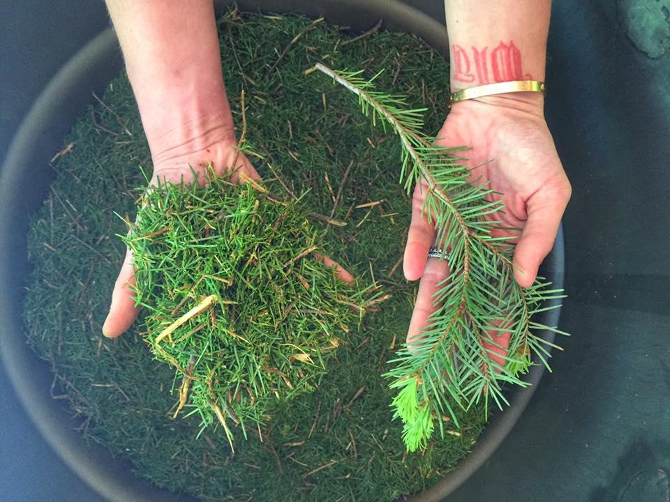 Sedona pine 3.jpg