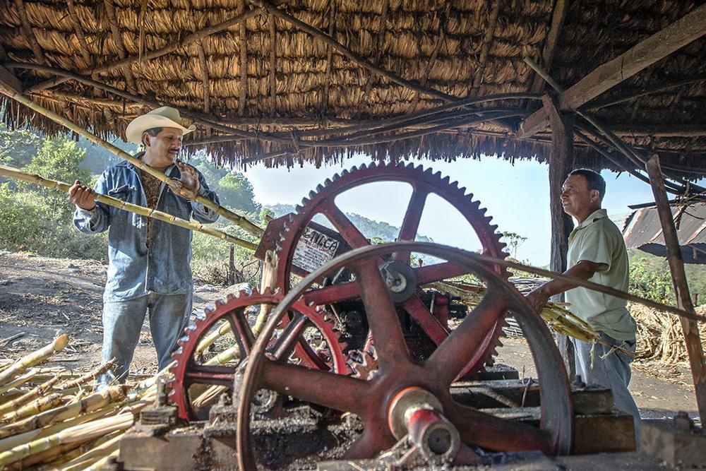 paranumbes-mexican-rum-Jose-Luis-y-trabajador-triturando-caña-horizontal-crdt-carlos-cervantes.jpg