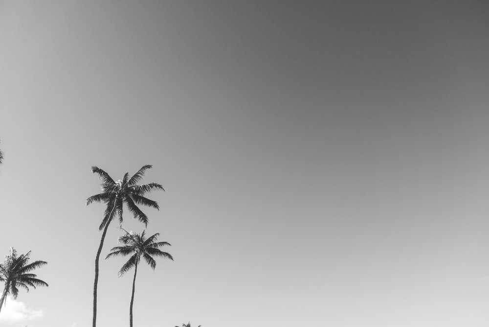 maui palm trees in black and white