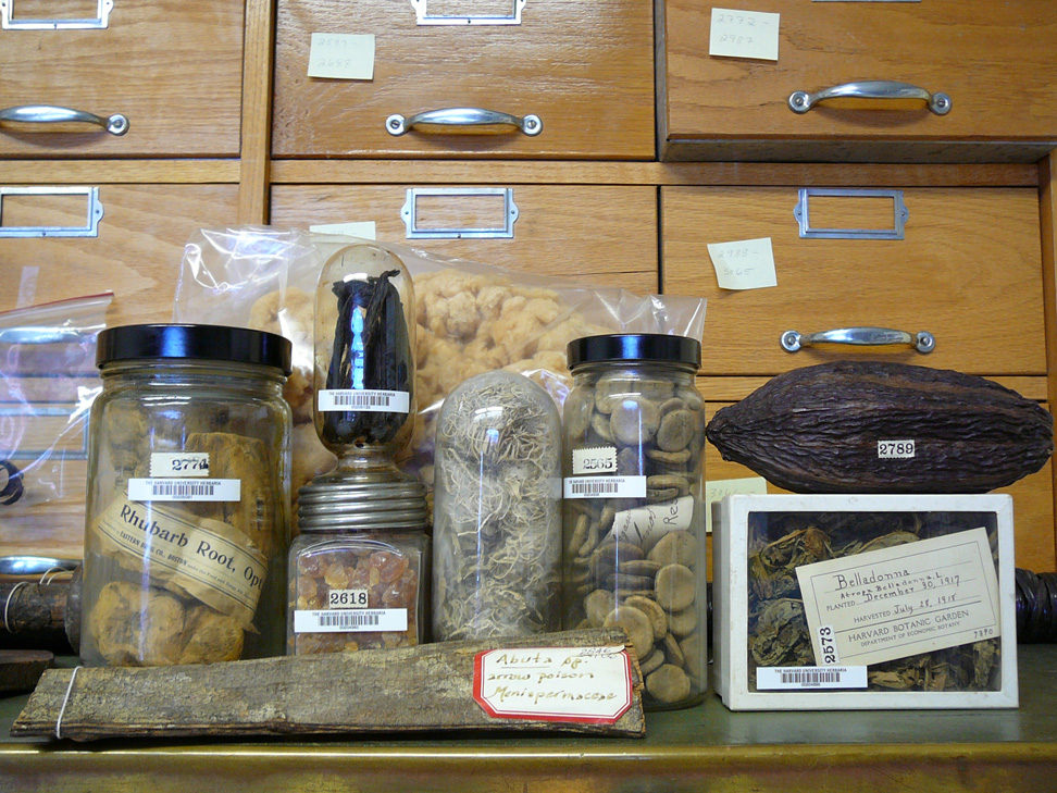 Museum Herbaria research curation 02.JPG