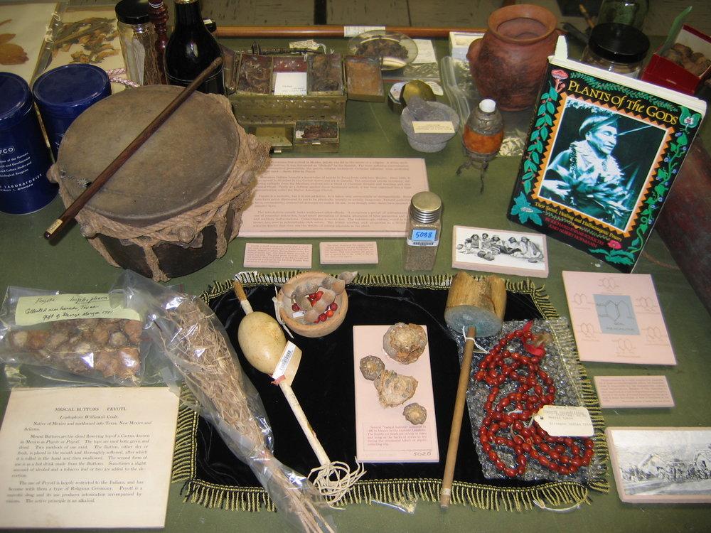 Museum herbaria research 06.jpg