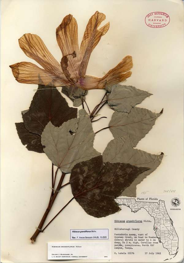 Museum herbaria research 05.jpg