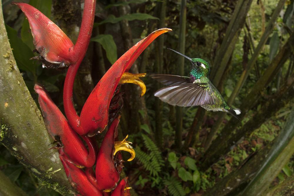 BASCO-hummingbird.jpg