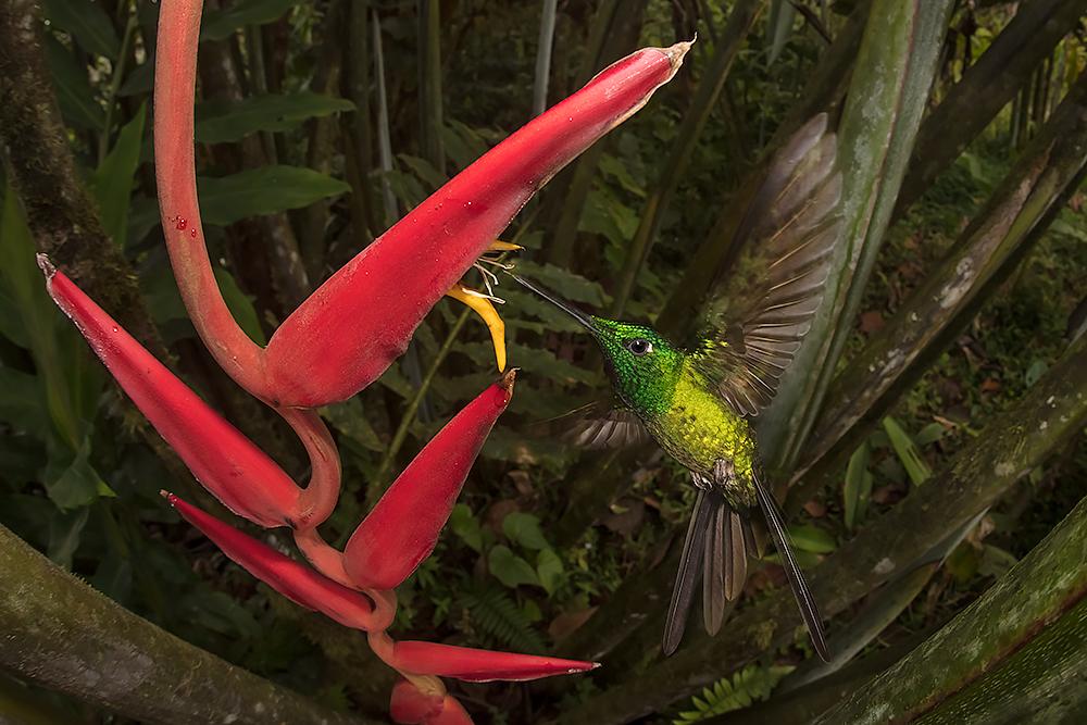 hummingbird-2.jpg