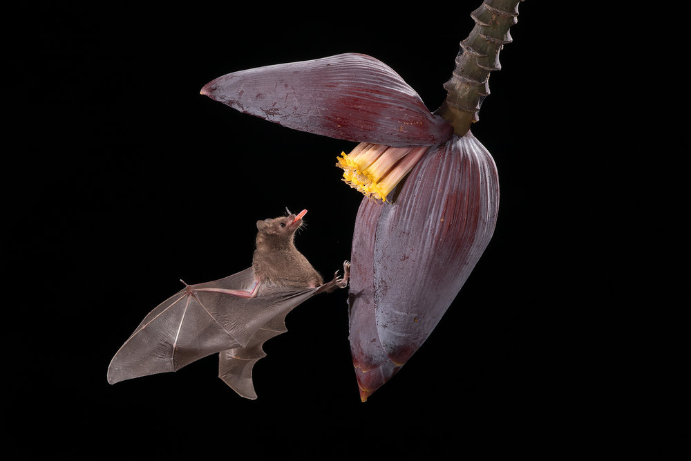 BASCO-flash-bat.jpg