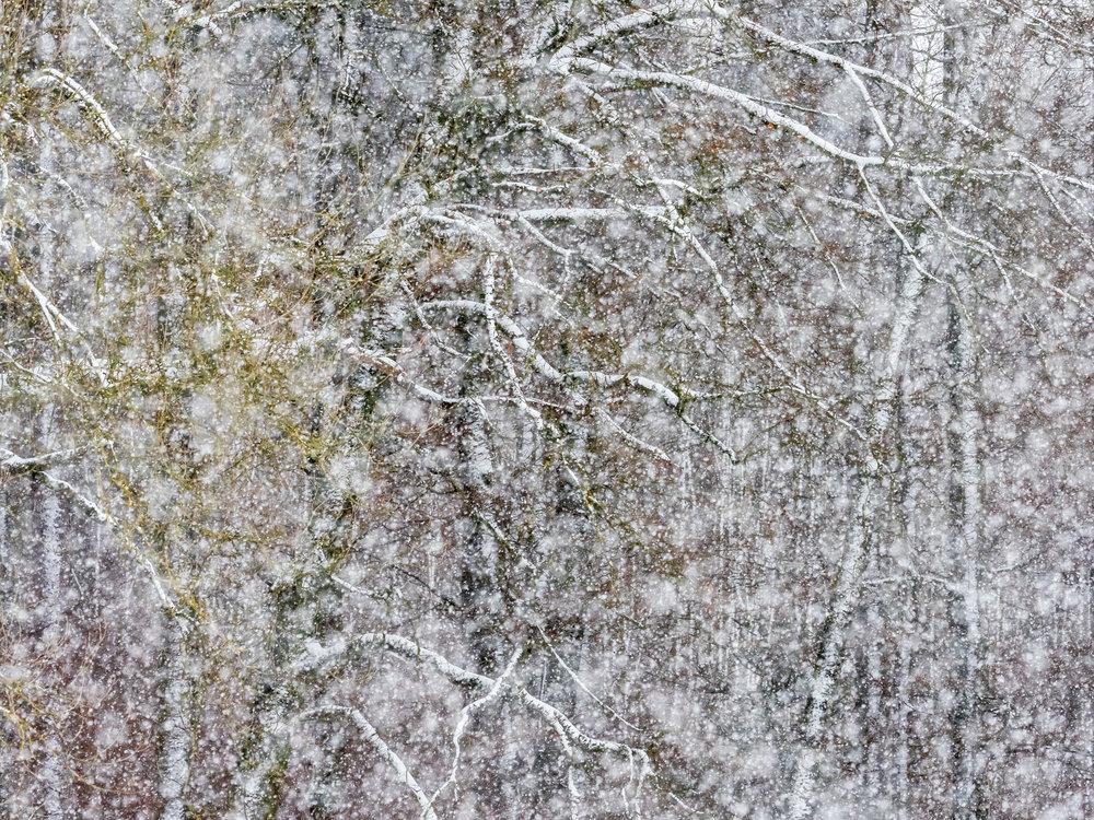 2_K6_Schneetreiben_am_Waldrand_klein.jpg