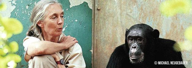 JaneSchimpanse.png