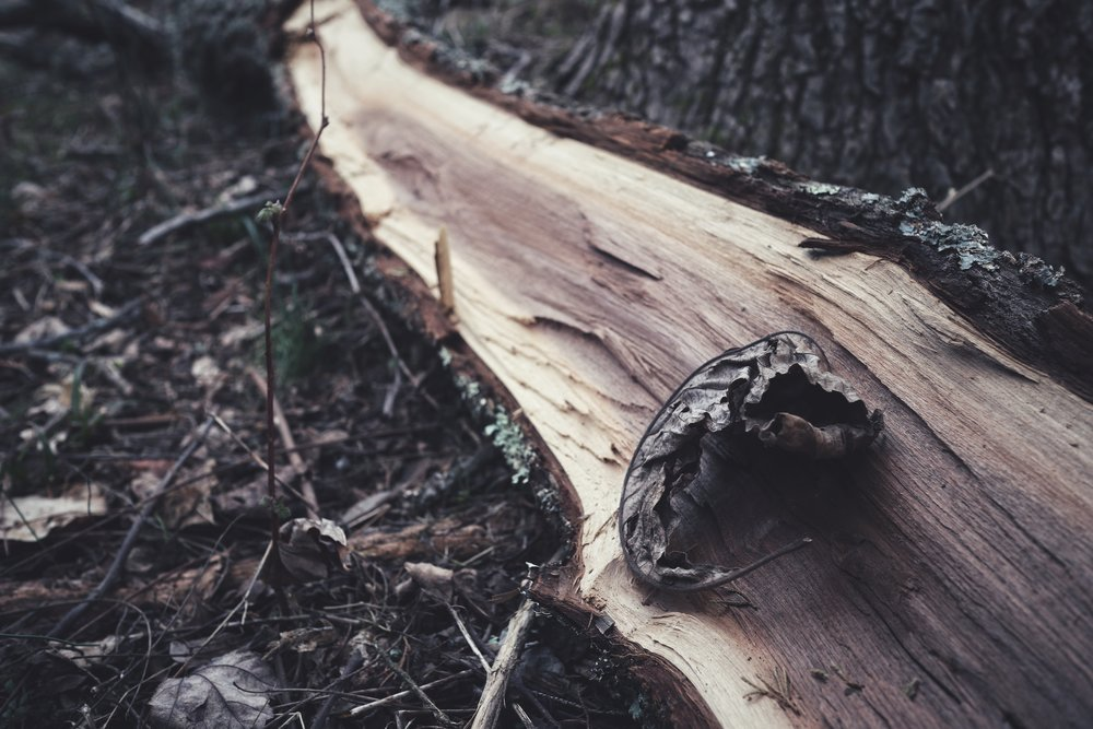 Snapseed 4.jpg