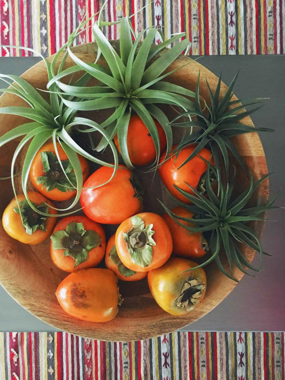 Persimmons and airplants | DrinkingwithChickens.com