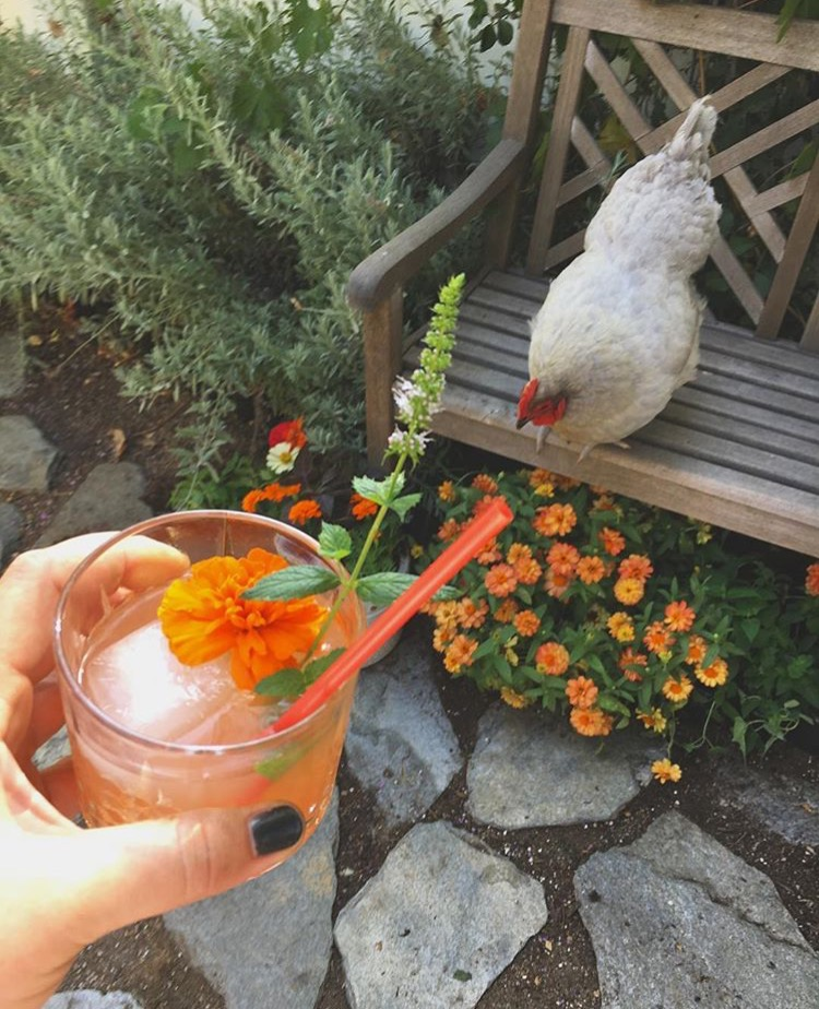 Garden cocktail in the cocktail garden | DrinkingwithChickens.com