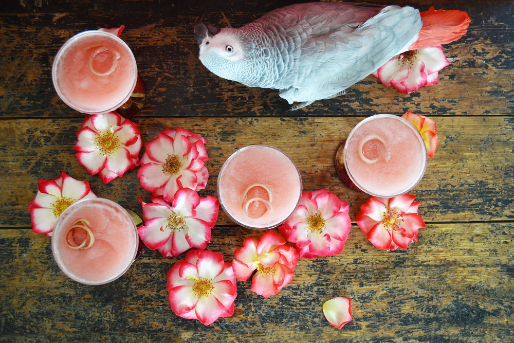 Rhubarb Rosewater Frosé and a parrot | drinkingwithchickens.com
