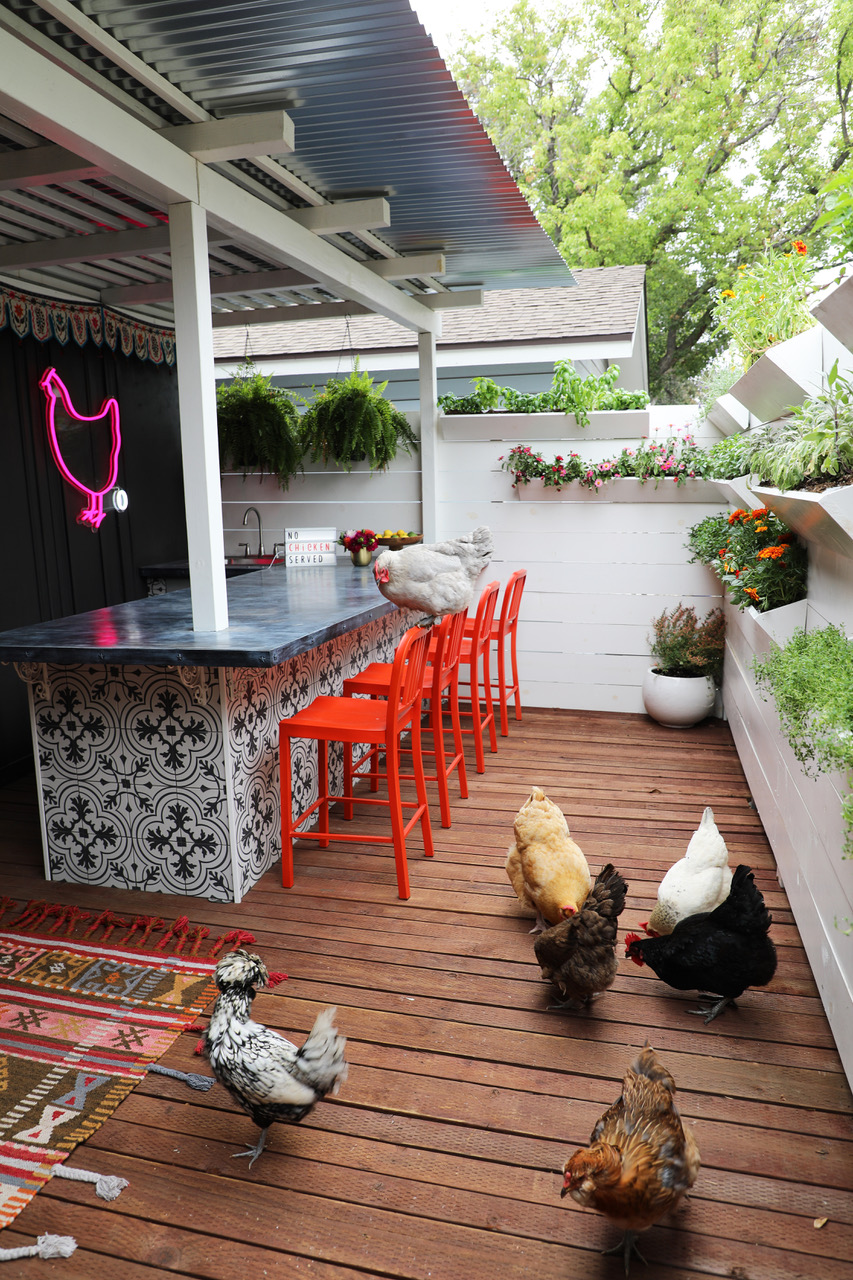 Chickens in The Chicken Bar...