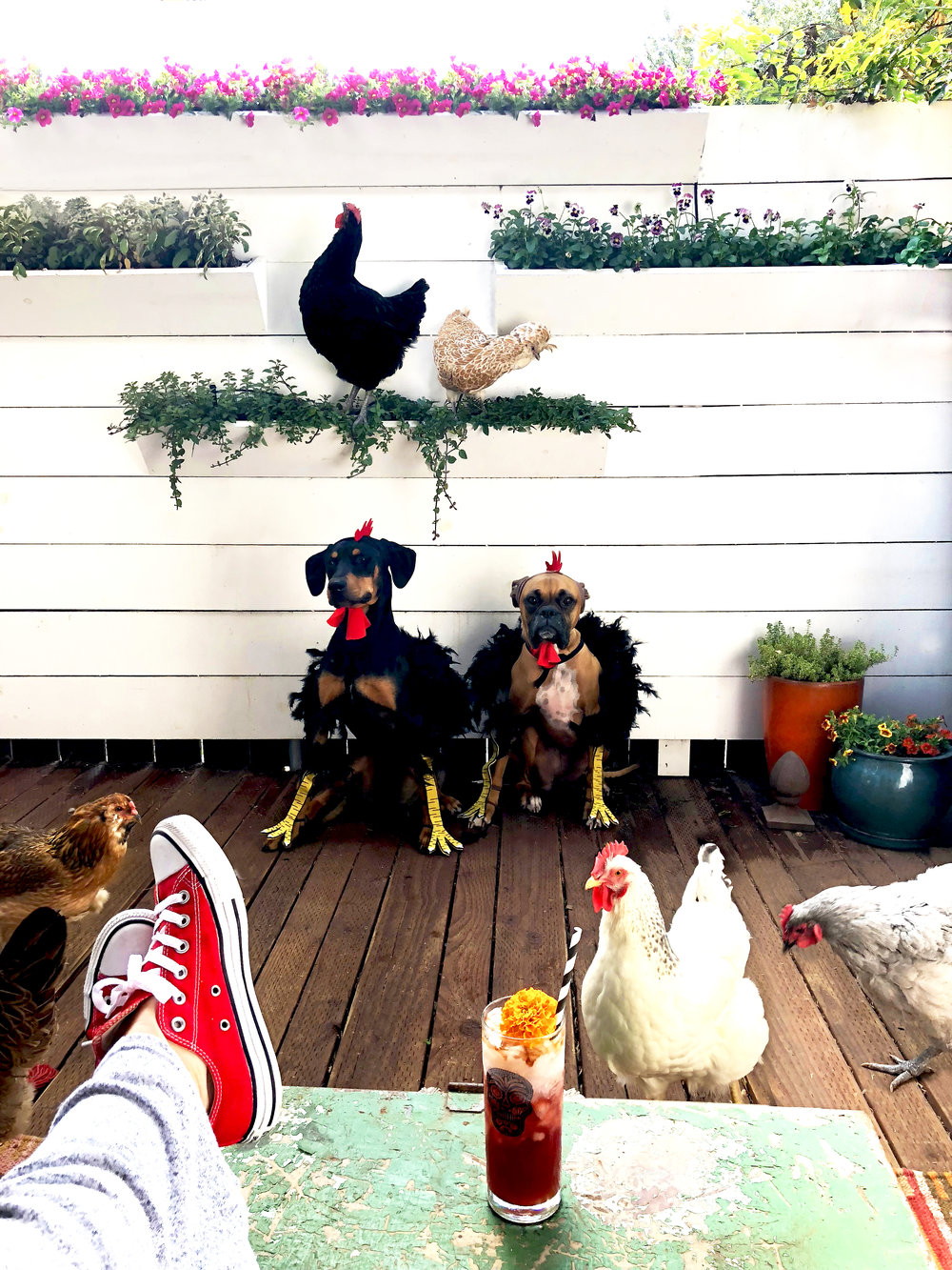 Drinkingwithchickens.com