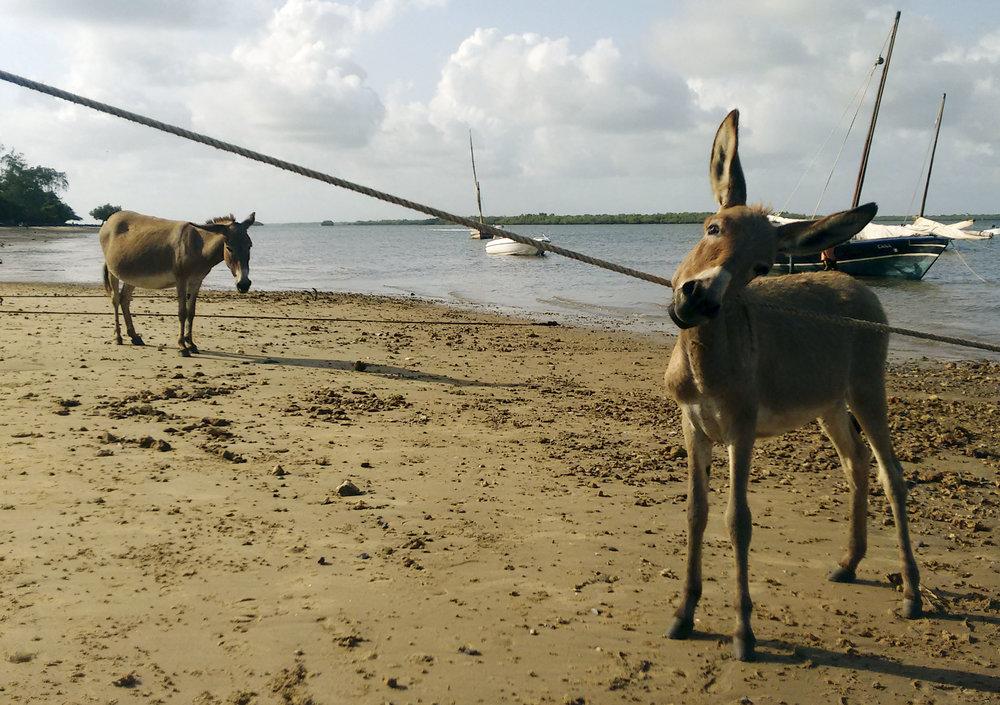 Lamu-Kenya-06-citymladyp.jpg