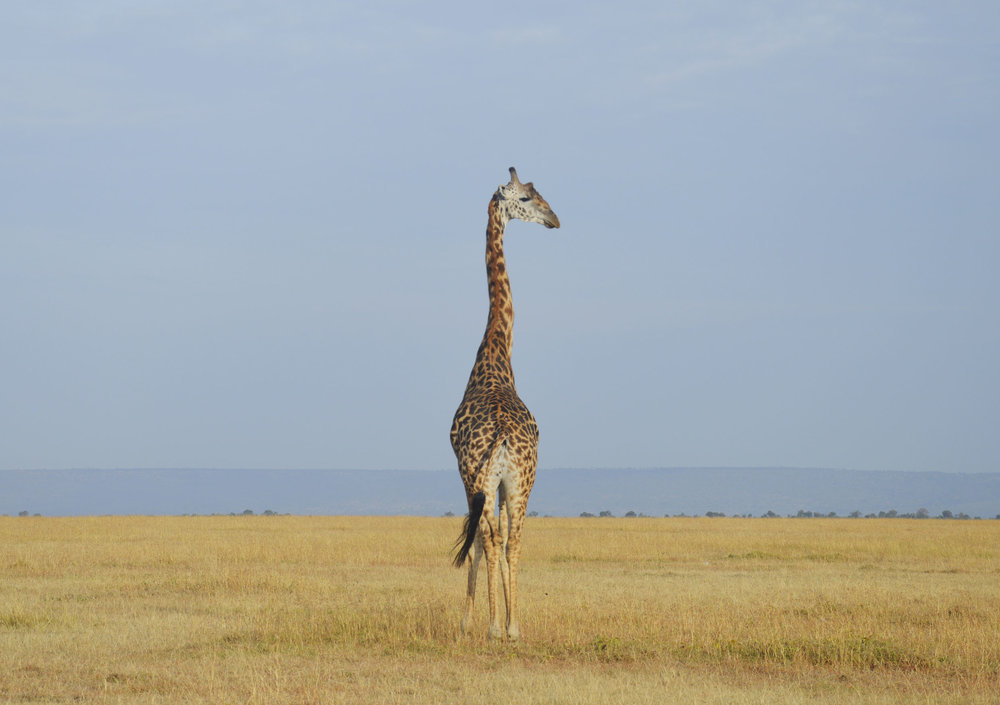 Mara-Kenya-03-citymladyp.jpg