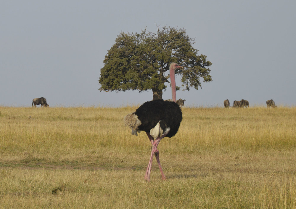 Mara-Kenya-04-citymladyp.jpg