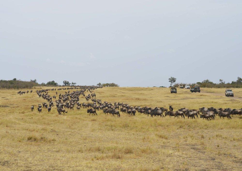 Mara-Kenya-08-citymladyp.jpg