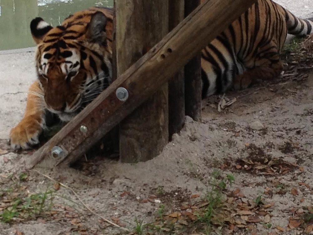 Florida-Big Cat Habitat