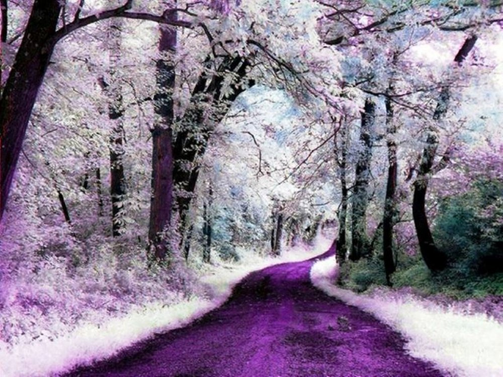purple-path.jpg